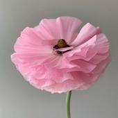 Friyay ! 🌸 @lapoetique_   .  #vendredi #friday #friyay #tgif #mood #pink #rose #flowers #flowerstagram #fleurs #poesie #poetic #aesthetic #aesthetic #fotd #paris